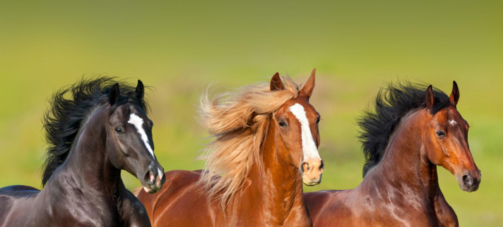 Tierheilpraxis mit Pferde- und Hundeosteopathie